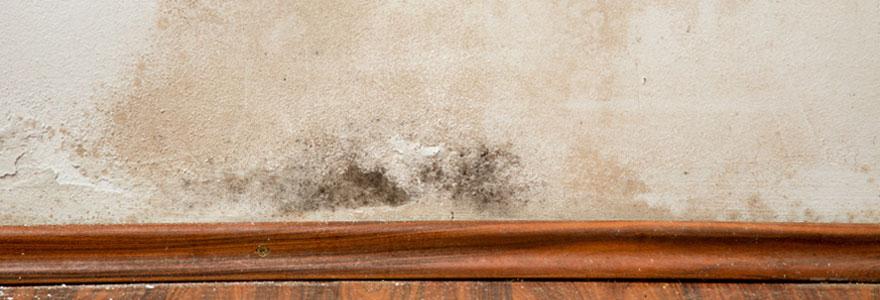 Problème d'humidité dans les murs